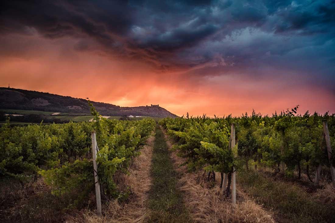 Pálava v bouřce - produktový fotograf vína - fotograf vinic