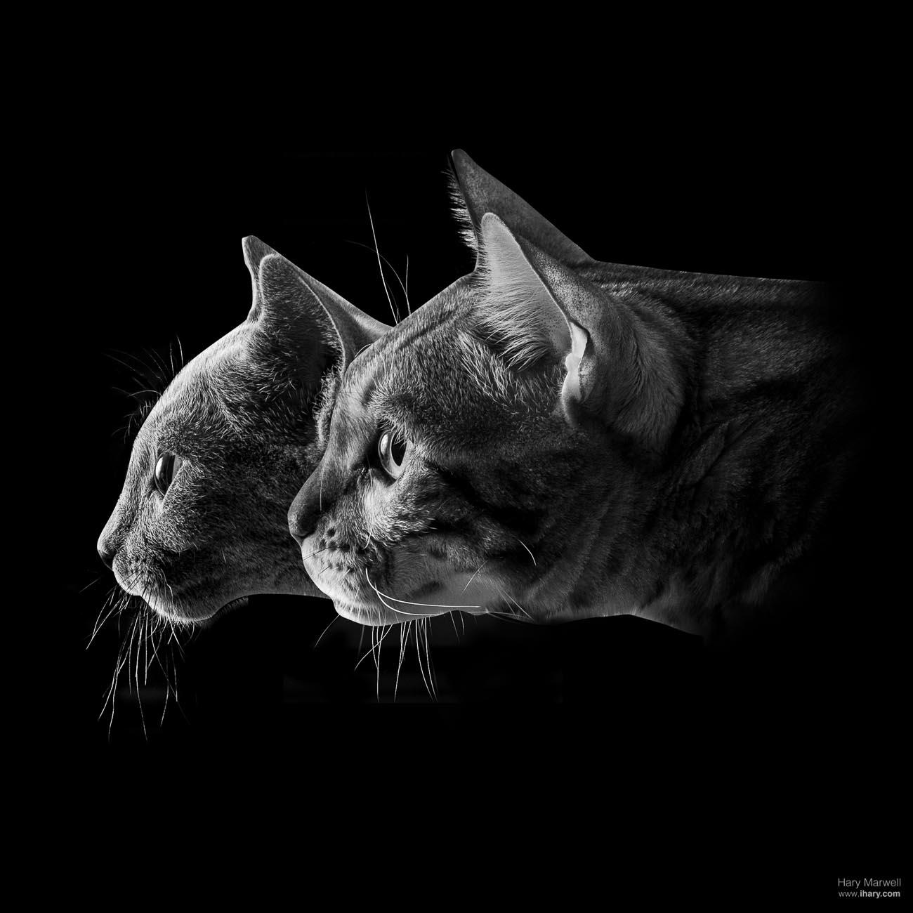 Kočičí portrét - focení domácích mazlíčků- rodinné focení